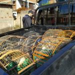 Delegacia do Meio Ambiente apreende aves silvestres no Vale do Sinos