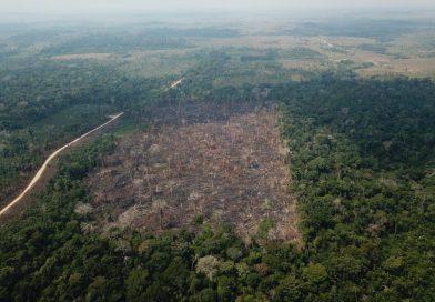 Desmatamento no Brasil em 2020 supera meta proposta na Convenção do Clima