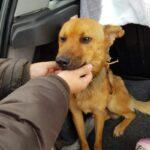 Polícia resgata cachorros que eram espancados e estavam desnutridos em Viamão